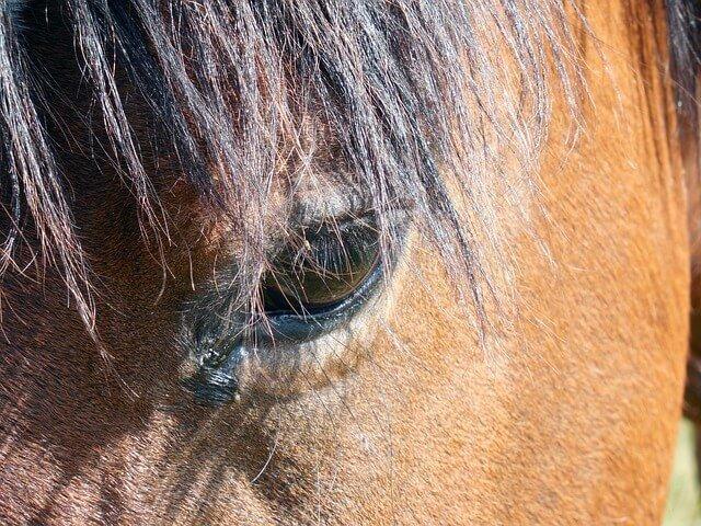 A horse's face