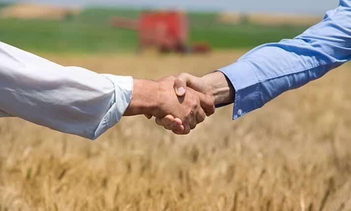 A combine harvests a cereal crop