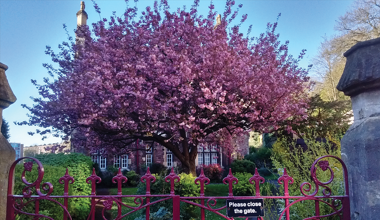 Spring 2019 - Photo Competition Runner-up - John Reynolds - My favourite tree