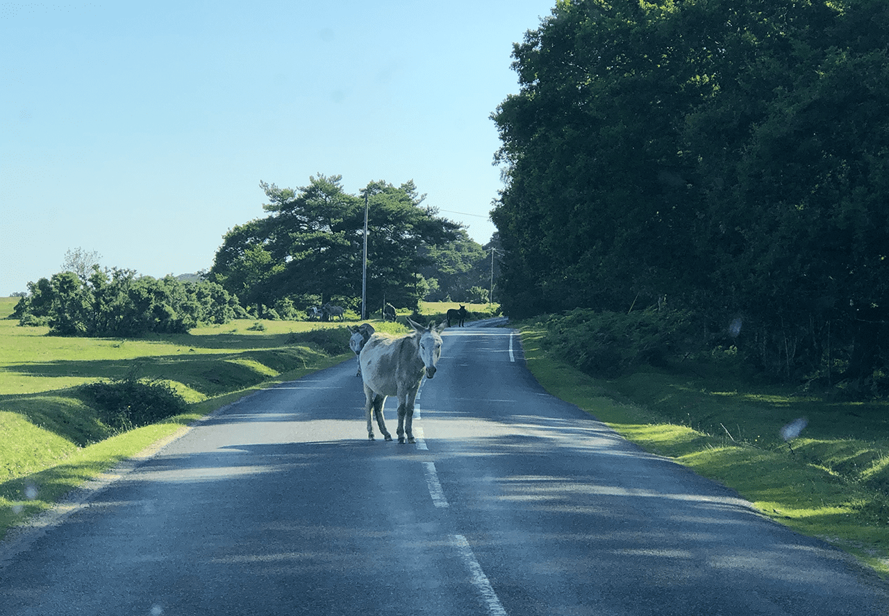 Photo Competition - Summer 2019 - Amy Kerr - Summer commute – this is why I was late